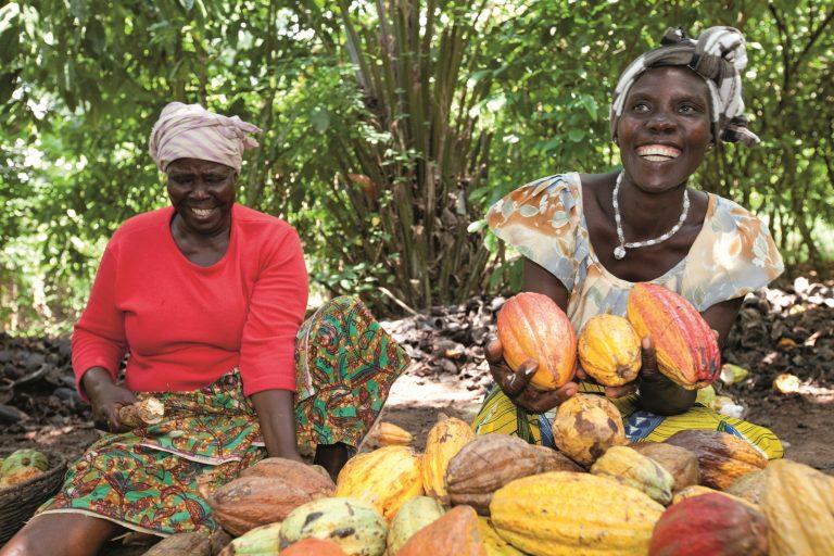 CAFD cooperative cocoa farm
