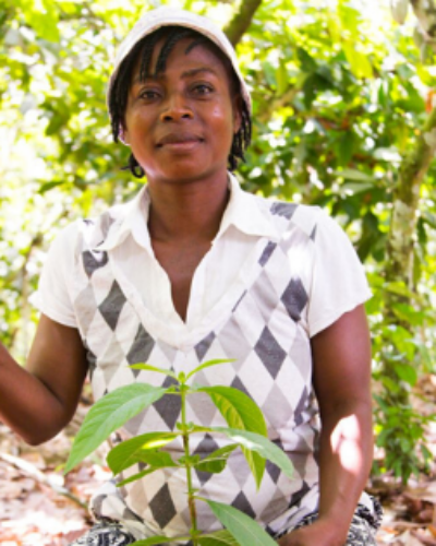 Sustainably farmed cocoa pods in West Africa Sustainability, cocoa sustainability, sustainable cocoa, why is sustainability important, sustainability defined, sustainability movement, cocoa plant, cocoa bean, cacao, raw cacao, deforestation, what is deforestation wcf world cocoa foundation cfi cocoa and forests women female cocoa farm cacao plant