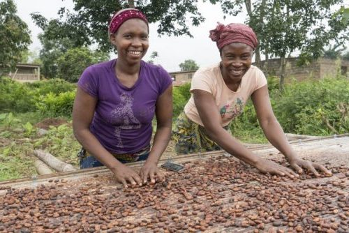 Sustainability, cocoa sustainability, sustainable cocoa, why is sustainability important, sustainability defined, sustainability movement, cocoa plant, cocoa bean, cacao, raw cacao, prosperous farmers, women in cocoa