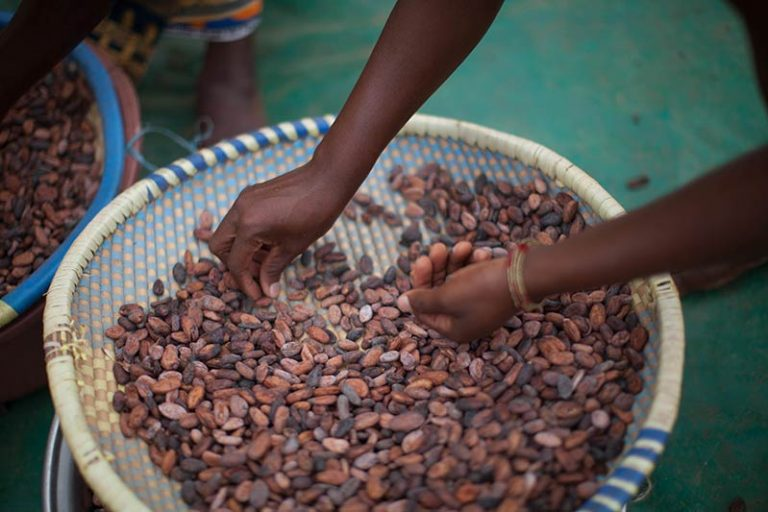 Fairtrade Cocoa