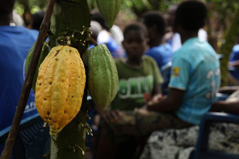 Frugt på træ med dreng i baggrund