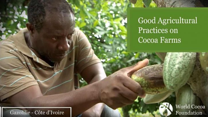 Video clip of sustainable cocoa farming in Cote d'Ivoire