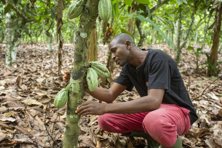 Sustainability, cocoa sustainability, sustainable cocoa, why is sustainability important, sustainability defined, sustainability movement, cocoa plant, cocoa bean, cacao, raw cacao