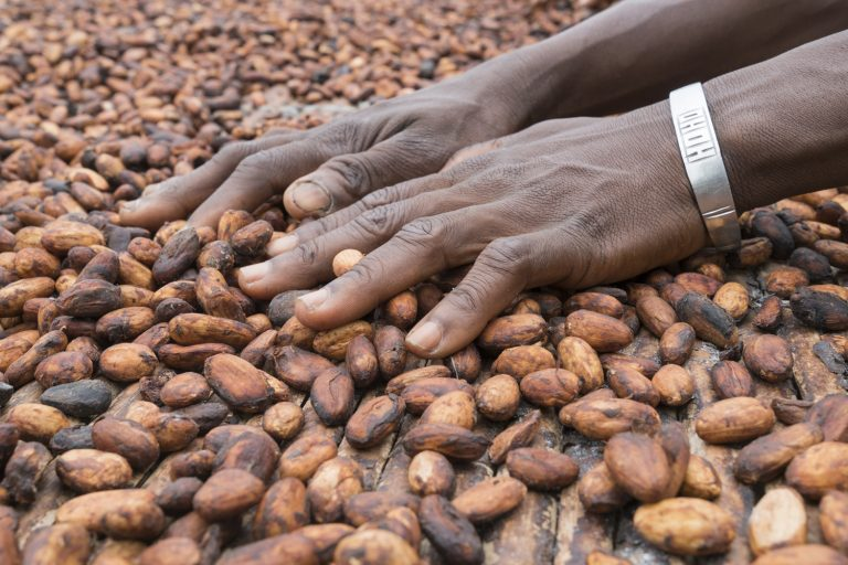 Sustainability, cocoa sustainability, sustainable cocoa, why is sustainability important, sustainability defined, sustainability movement, cocoa beans, cacao, raw cacao