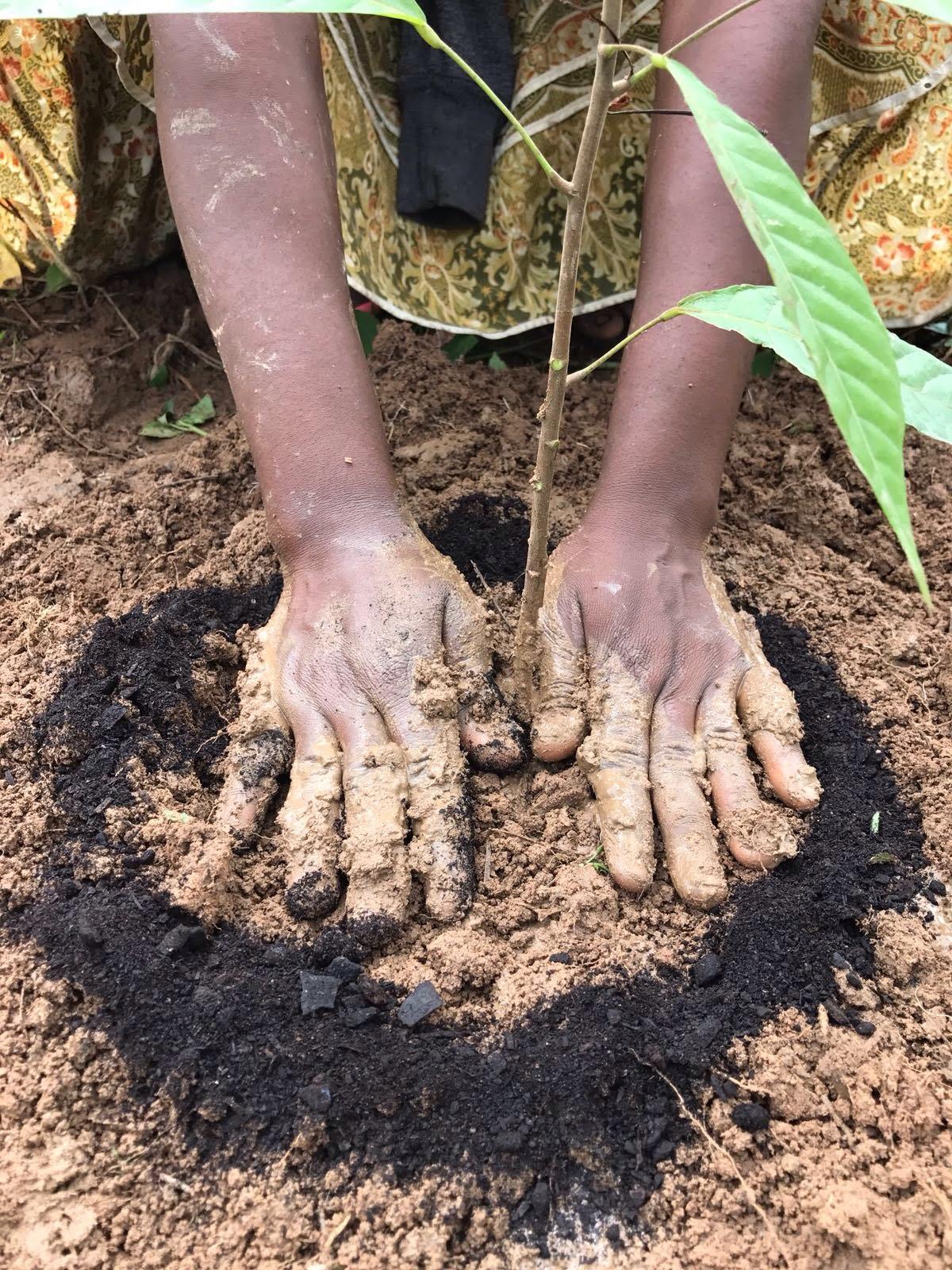 Sustainability, cocoa sustainability, sustainable cocoa, why is sustainability important, sustainability defined, sustainability movement