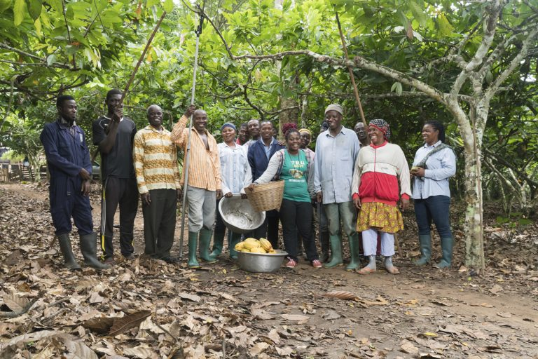 group of cocoa farmers on cocoa farm in Ghana