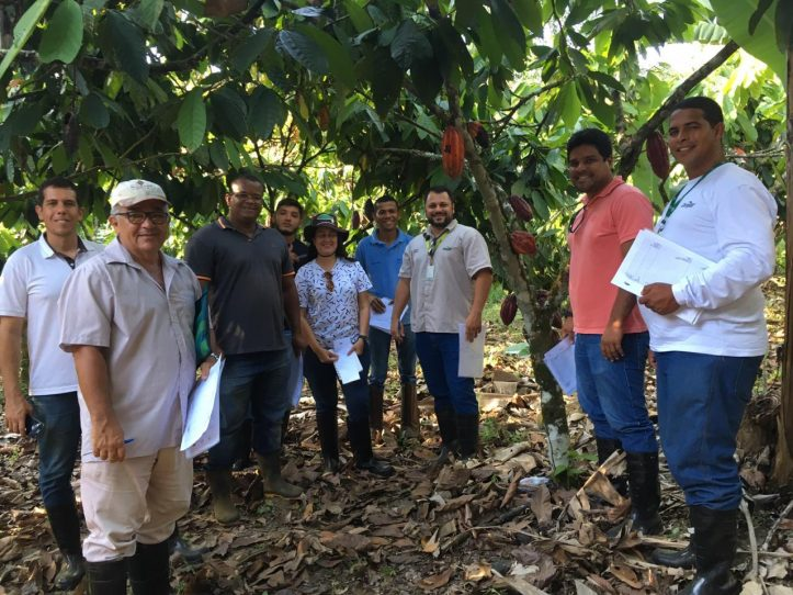 Sustainability, cocoa sustainability, sustainable cocoa, why is sustainability important, sustainability defined, sustainability movement, cocoa plant, cocoa bean, cacao, raw cacao, deforestation, what is deforestation brazil cacao brasil cacau cocoaaction brasil