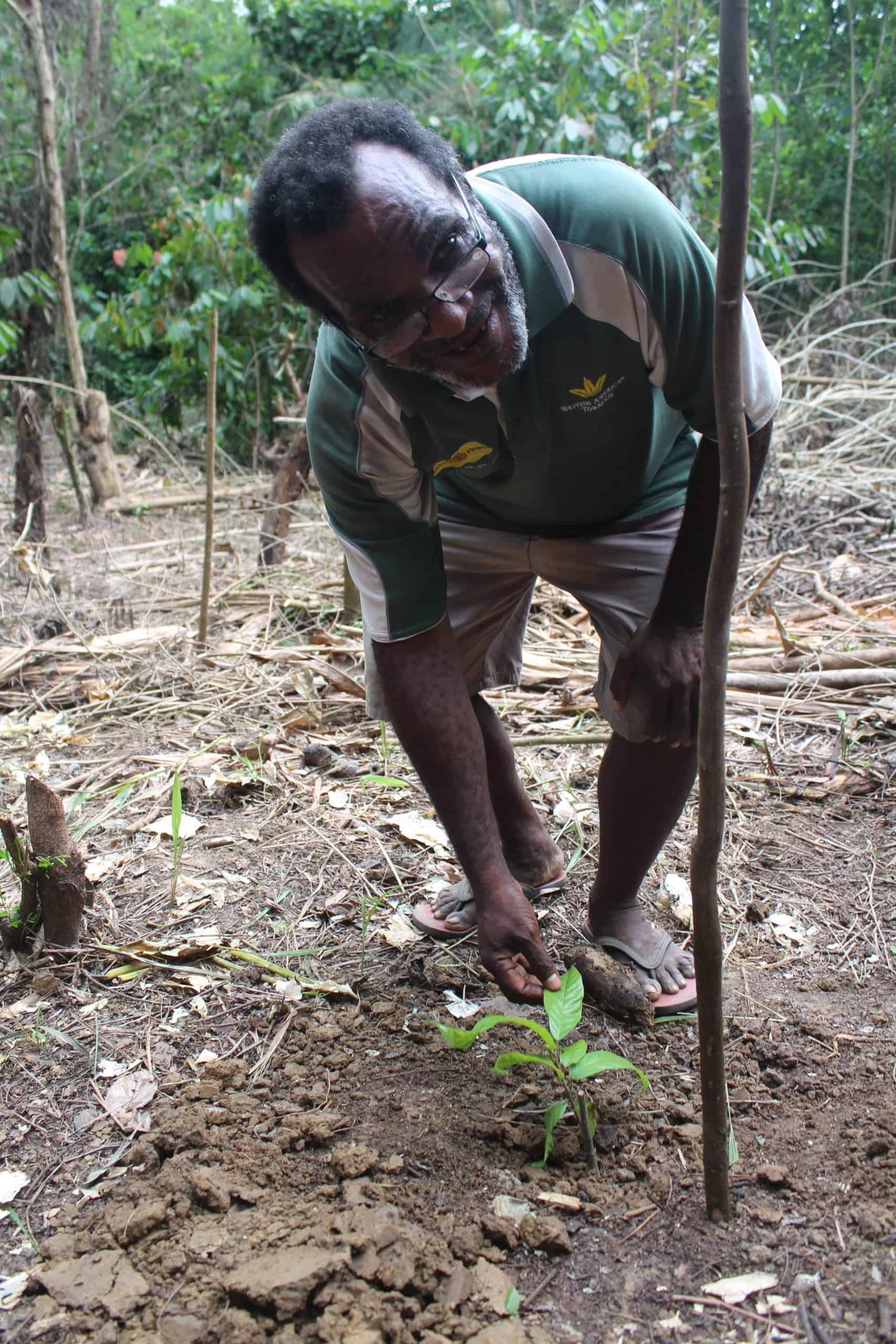Sustainability, cocoa sustainability, sustainable cocoa, why is sustainability important, sustainability defined, sustainability movement, cocoa plant, cocoa bean, cacao, raw cacao, deforestation, what is deforestation Sustainable cocoa farmer in Papua New Guinea