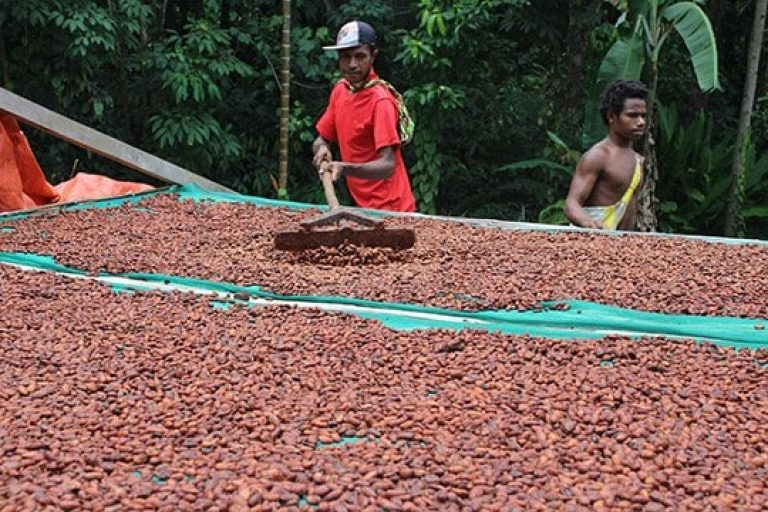 Sustainability, cocoa sustainability, sustainable cocoa, why is sustainability important, sustainability defined, sustainability movement, cocoa plant, cocoa bean, cacao, raw cacao, deforestation, what is deforestation Drying sustainably farmed cocoa beans in Papua New Guinea