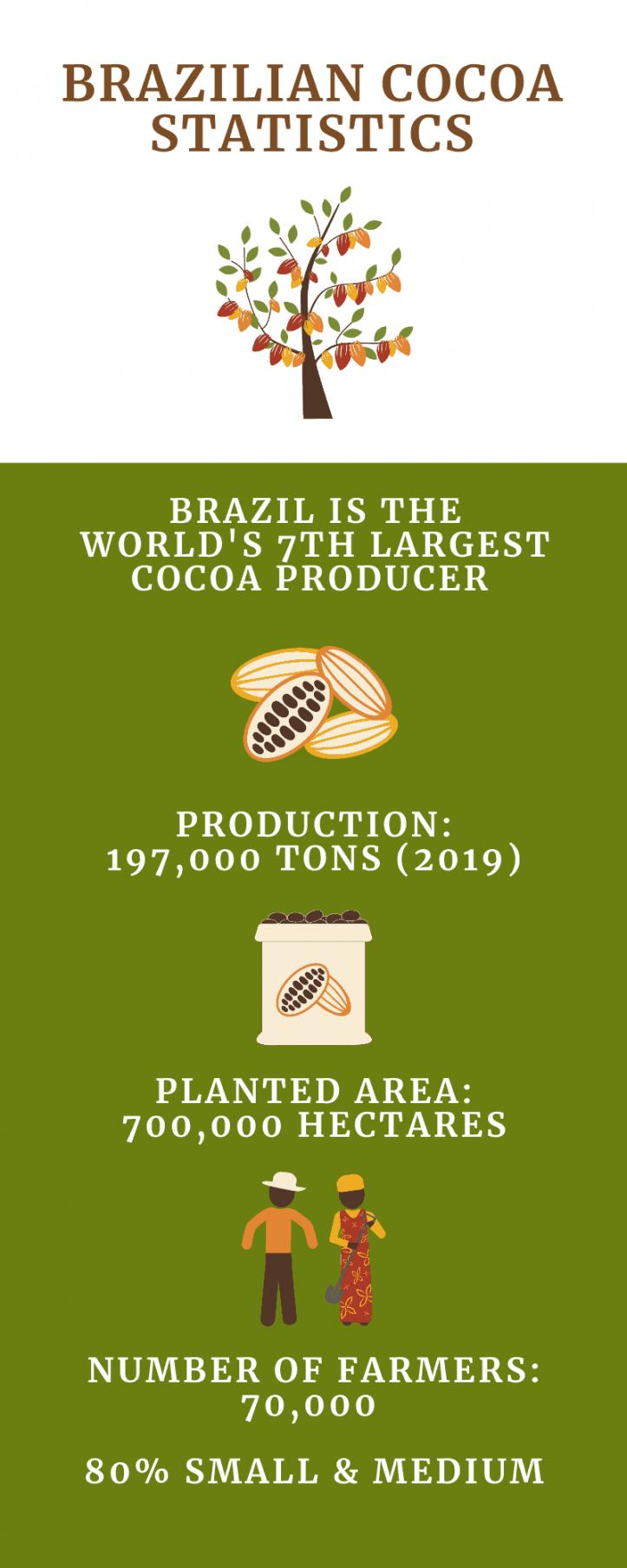 Brazil cocoa statistics, infographic