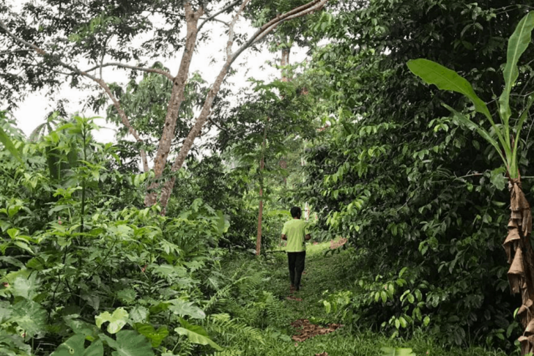 Indigenous sustainable cocoa farmer walking through his agroforestry farm in Orellana province in Ecuador