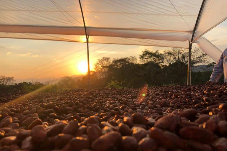Sustainable cocoa beans in Colombia