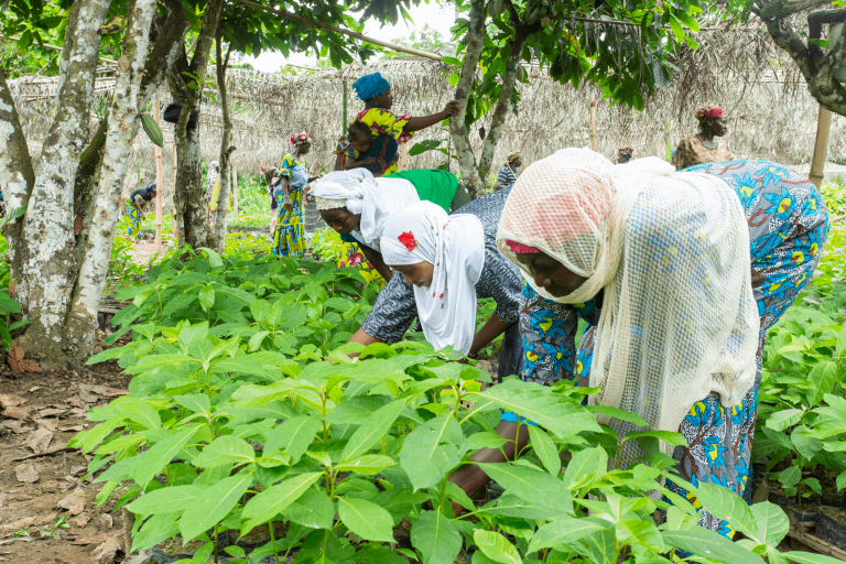 West African women cocoa farmers at sustainable cocoa seedling nursery