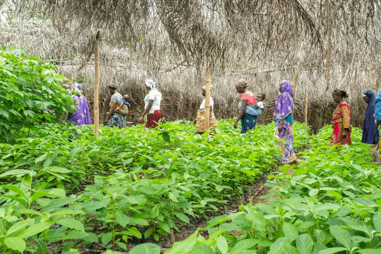 West African women in cocoa seedling nursery