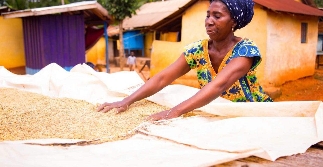 Cocoa farmer Vida Amoaning dries grain in Nyamebekyere, Ashanti region, Ghana