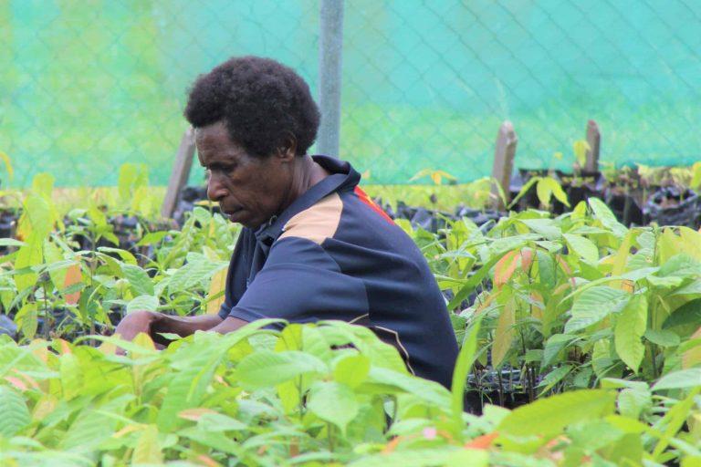 Betty Joshua Cocoa nursery