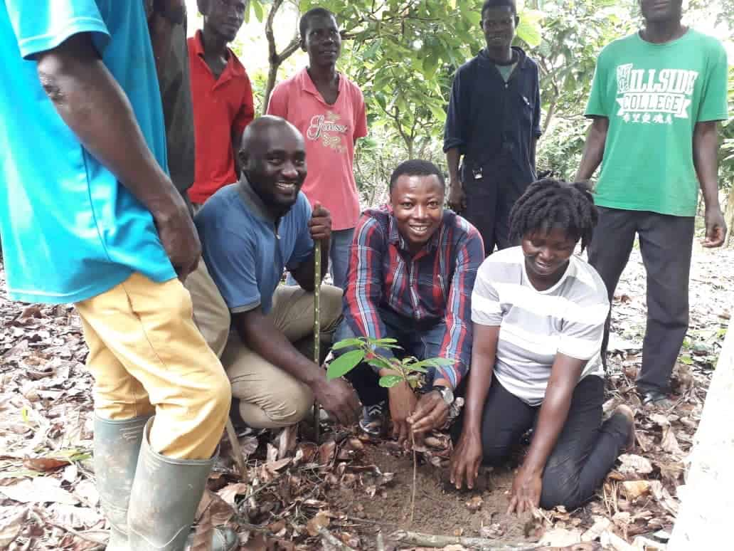 Cocoa farmers next to sustainable cocoa seedling on farm in Ghana