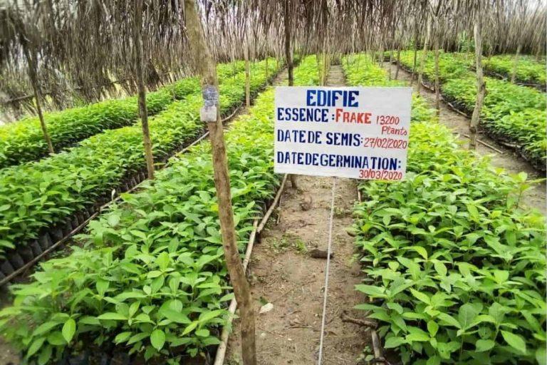 EDIFIE_Nursery