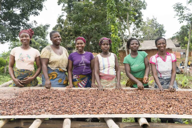Group of women cocoa farmers from Cote d'Ivoire with cocoa beans drying