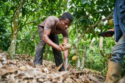 Cocoa farmer establishing specially approved farm boundary pillars, instructed by a Landmapp field agent (the pillar will be mounted with cement after the mapping). Credit: Landmapp (www.landmapp.net)