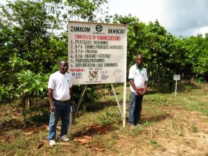 A demonstration plot established as part of the ECOM-MARS Matching Grant in Côte d'Ivoire.