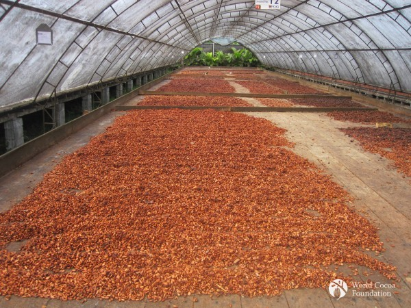Cocoa Drying House