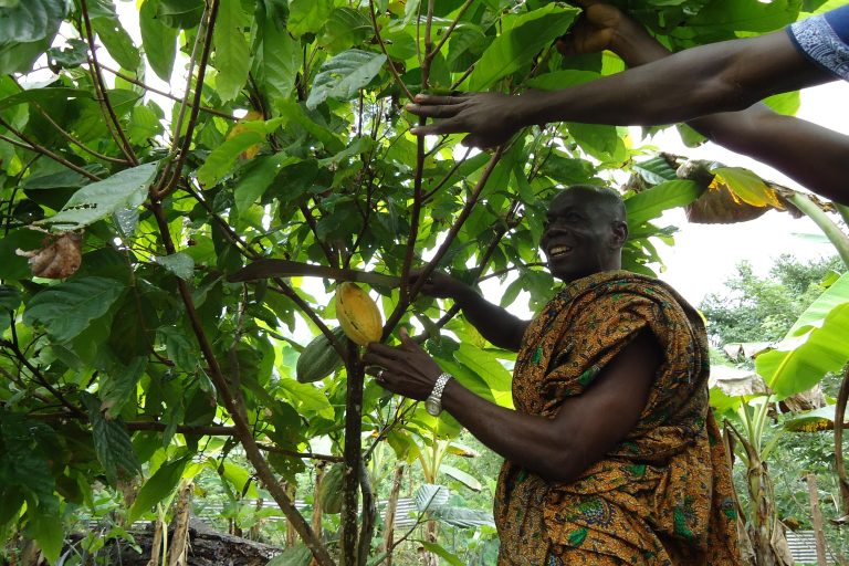 Cocoa Farmers 2 – First ECHOES Harvest