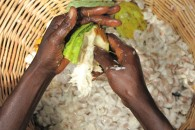 Cocoa Farmers 4 - Hands