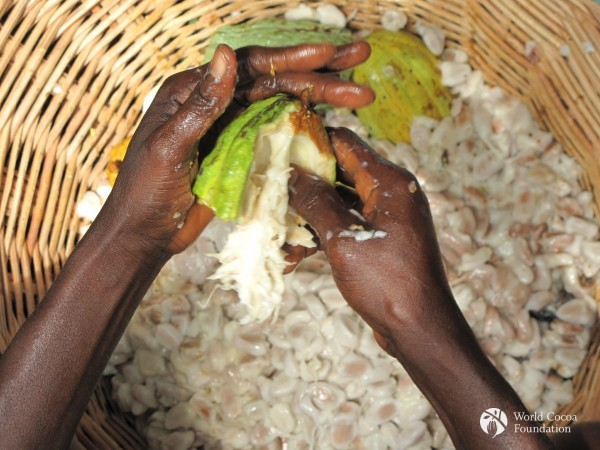 Cocoa Farmers 4 - Hands