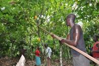 Cocoa Farmers 7