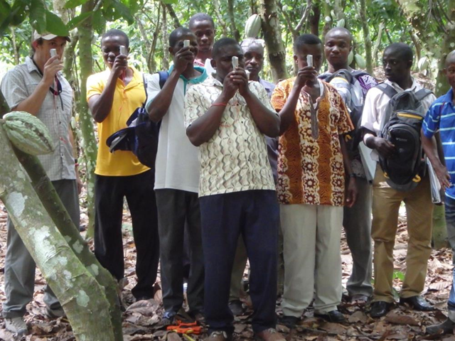 Farmers test CocoaMAP FIT in Ghana. photo by Matthew Quinlan, DMLLC