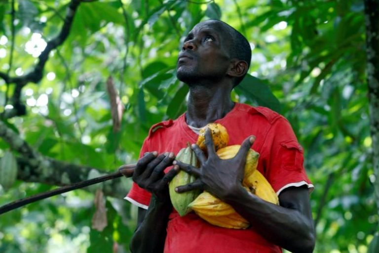 FILE PHOTO: A farmer carries cocoa pods at a cocoa farm in Agboville