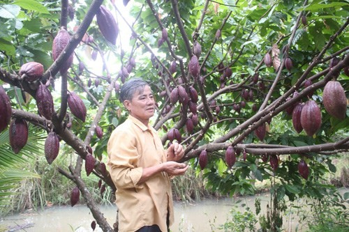 Doan van Le on his thriving cocoa farm in Vietnam.