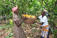 Women Cocoa Farmers