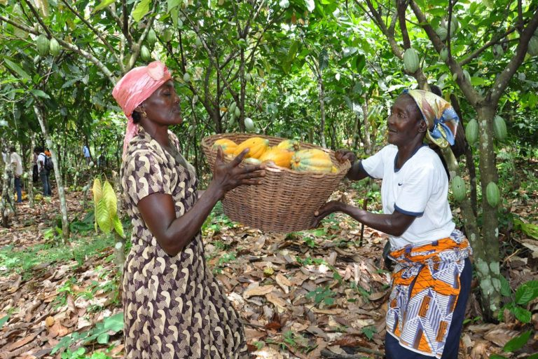 Women Cocoa Farmers Sustainability, cocoa sustainability, sustainable cocoa, why is sustainability important, sustainability defined, sustainability movement, cocoa plant, cocoa bean, cacao, raw cacao, deforestation, what is deforestation