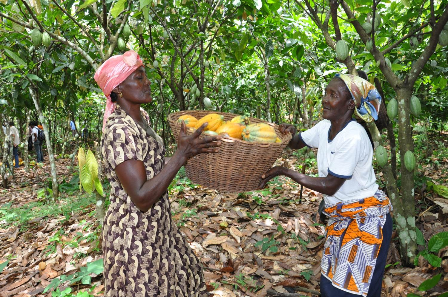 Women Cocoa Farmers