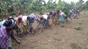 Women working to clear the school garden plot.