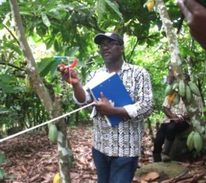 WCF's Monitoring and Evaluation Coordinator, Edwin Afari, measuring cocoa best practices.